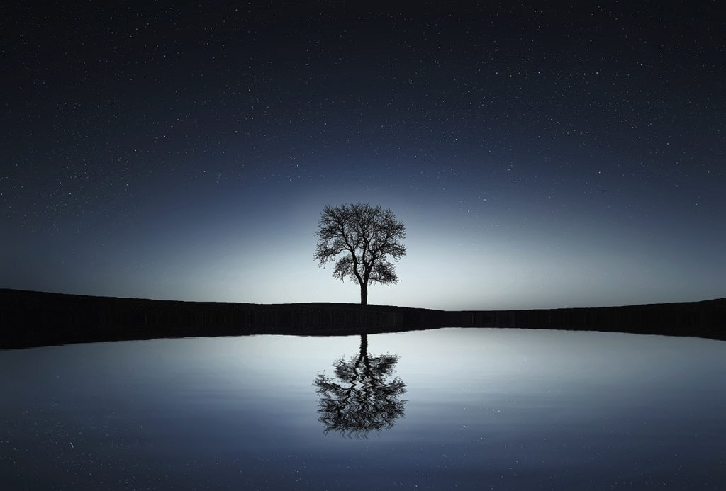 Patience like one tree with a glow of light