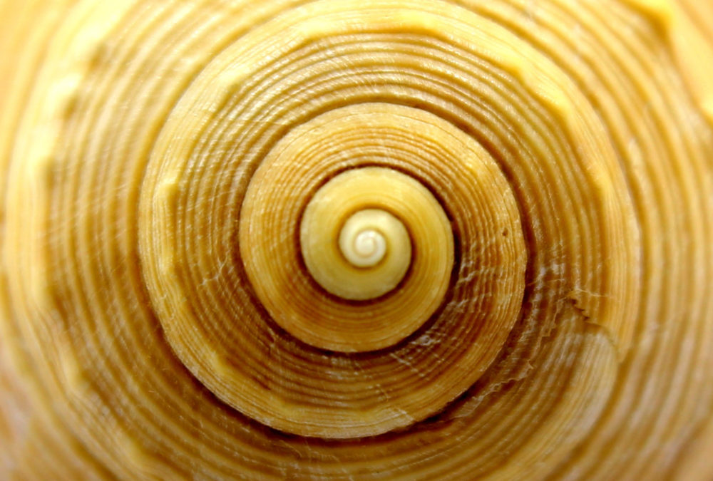 Spiral conche shell intuition
