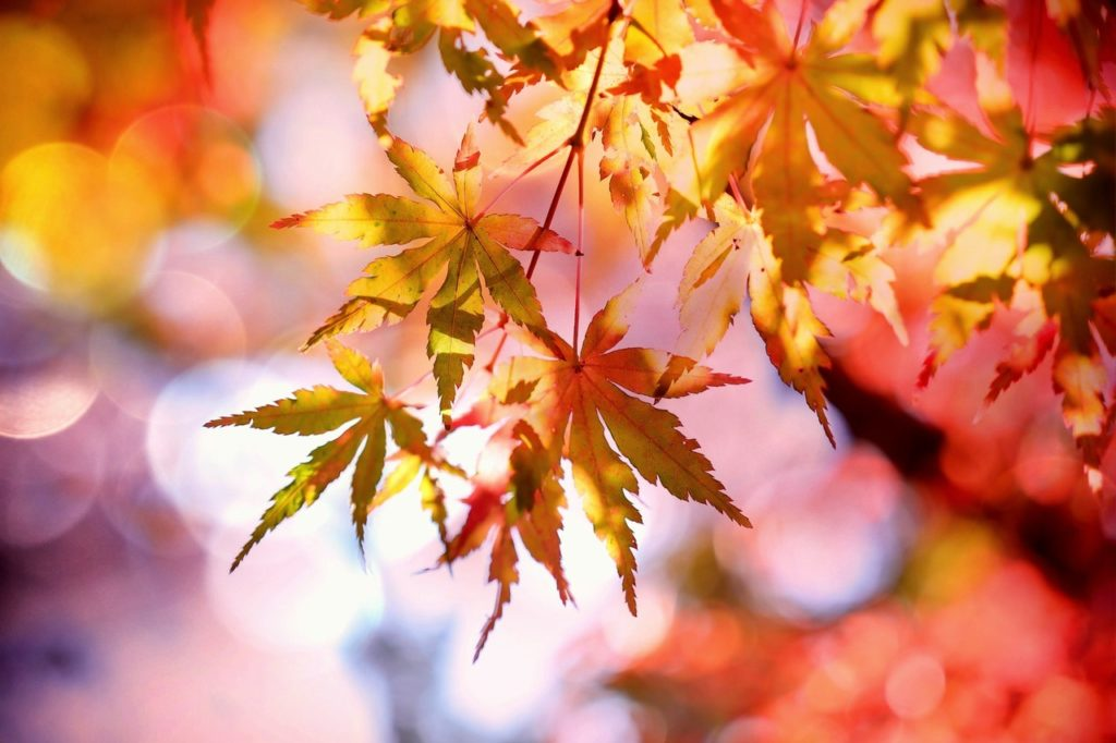 fall leaves falling to let go in order to grow